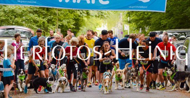 Fotos vom Melpomene-Lauf und 6-Pfoten-Lauf