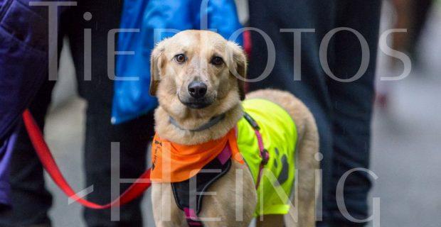Fotos vom Melpomene-Lauf und 6-Pfoten-Lauf 2018